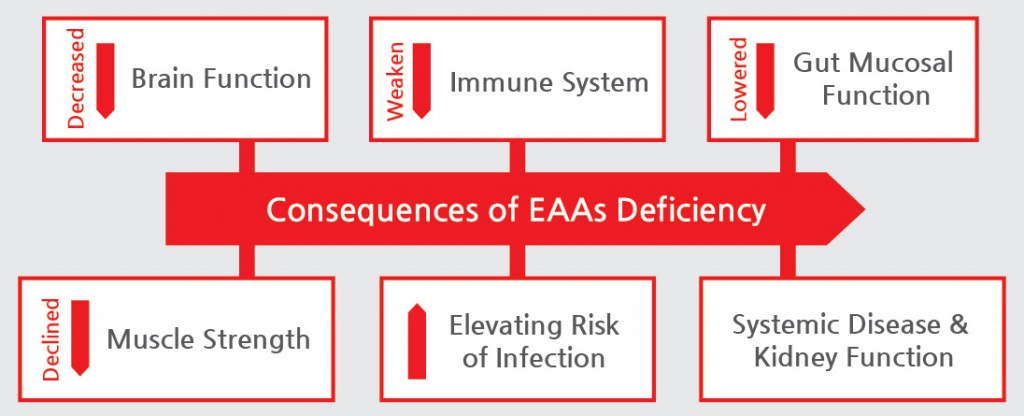 Consequences of EAAs deficiency