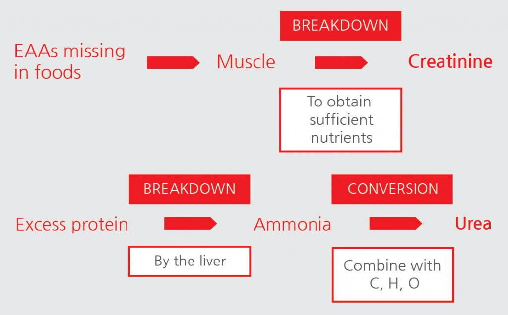 protein-related metabolic